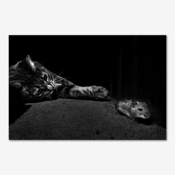 Kattens leg med musen. Foto Lars Krabbe.
